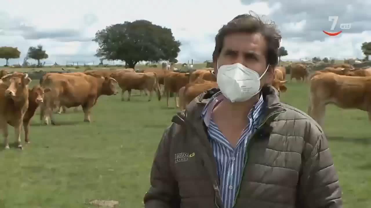 Proyecto SOSTVAN: mejorar el posicionamiento de la carne de vacuno en el mercado